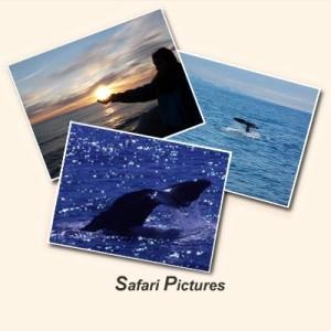 Safari-Pictures